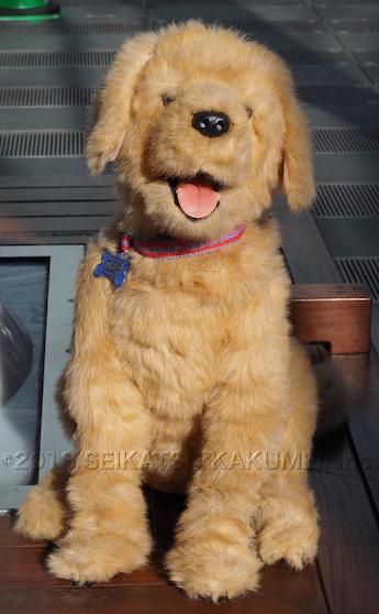 こんにちは。 AIBO(アイボ)です! と言いたくなります。 AIBO(アイボ)に比べて純粋な犬であるところが最大の特徴です。