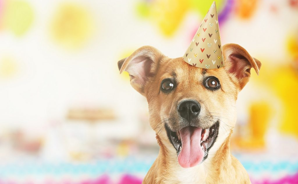Funny cute dog celebrating party